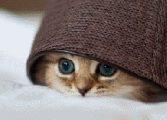 Где кот
