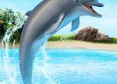 Шоу дельфинов 5