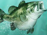 Крутая Рыбалка 3Д